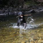 Das Seeungeheuer