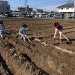 土を耕して畝を作るところから