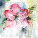 Amaryllis-(8) / Watercolour 25x25cm