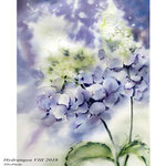 Hydrangea VIII 2018 / 30x40cm / (22) / Watercolour by ©janinaB.