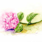 Hortensie-(1) / Watercolour 30x40cm © janinaB.
