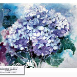Hydrangea XII 2017 / Watercolour 65x50cm on Paper © janinaB. 2017