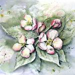 Apfelblüten (18) / Watercolour 30x40cm  © janinaB.