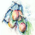 Reife-Früchte-(4) / Watercolour 30x40cm