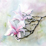 Magnolienzeit (8) / Watercolour 30x40cm  © janinaB.