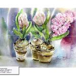 hyacinth / Watercolour 30x40cm on Fabriano CP © janinaB. 2017