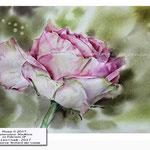 Rose II 2017 / Watercolour 30x40cm on Fabriano CP © janinaB. 2017