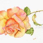 lolita (5) / Watercolour 30x40cm  © janinaB.
