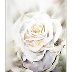 weisse Rose I (O1) / Watercolour 15x20cm