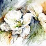 White Cosmos (15) / Watercolour 30x40cm / insp. Fabio Cembranelli