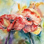 Mohn (O1) / Watercolour 18x25cm