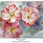 Roses II 2018 (20) /  30x40cm Watercolour by ©janinaB.