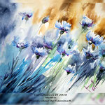 Cornflowers II 2018 (22) / 30x40cm Watercolour by ©janinaB.