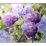 Hortensien (8) / Watercolour 27x35cm