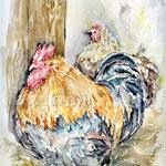 Hühner (19) / Watercolour 24x32cm