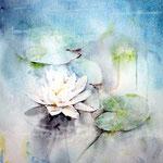 Wasserlilie_2011 (1) / Watercolour 30x40cm