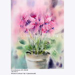 Cyclamen II 2018  (20) / 30x40cm Watercolour by ©janinaB.