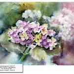 hydrangea I 2017 / Watercolour 30x40cm on Arches CP ©janinaB.2017