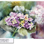 hydrangea I 2017 (17) / Watercolour 30x40cm on Arches CP ©janinaB.2017