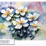 Anemones III 2017 (8) / Watercolour 30x40cm on Arches CP © janinaB. 2017
