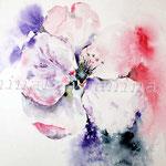 Apfelblüte (O1) / Watercolour 18x24cm