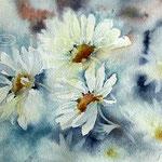 daisies II (8) / Aquarell 23x30 auf Arches
