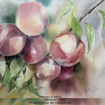 Plums I 2018 / 30x40cm (22) / Watercolour by ©janinaB.
