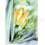 Zucchini I 2017 / Watercolour 20x30cm on Fabriano CP © janinaB. 2017