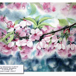 cherry blossom II 2017 / Watercolour 30x40cm on Arches CP © janinaB. 2017