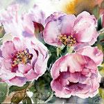 Rosen (17) / Watercolour 22x30cm