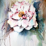 wild rose I-2011 (1) / Watercolour 30x40cm