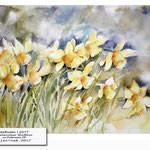 daffodils I 2017 (14) / Watercolour 30x40cm on Fabriano CP © janinaB. 2017
