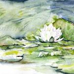 Seerose-(6) / Watercolour 30x40cm  © janinaB.