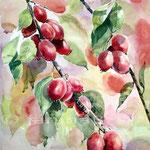 Zierapfel  (25) / 30x40cm / Watercolour bei ©janinaB.