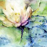Wasserlilie I 2011 (14) / Watercolour 30x40cm