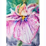 Iris I 2018 (O3) / 10x15cm Watercolour by ©janinaB.