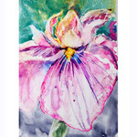 Iris I 2018 (O1) / 10x15cm Watercolour by ©janinaB.