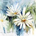 Margeriten (20) / Watercolour 30x40cm / insp. Fabio Cembranelli