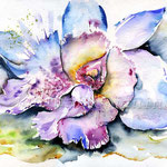 Orchidee (8) / Watercolour 24x32cm  © janinaB.