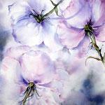 fliegende Rosen (14) / Watercolour 30x40cm