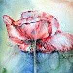 Poppy I 2012 (13) / Watercolour 30x40cm