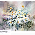 chamomile I 2017 / Watercolour 30x40cm on Fabriano CP © janinaB. 2017