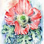 Schlafmohn (5) / Watercolour 30x40cm  © janinaB.