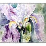 Iris (15) / Watercolour 23x31cm