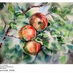 Äpfel I 2016 (4)/ Aquarell 30x40cm auf Arches © janinaB. 2016