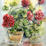 rote Pelargonie (17) / Watercolour 24x32cm  © janinaB.