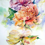 verblühte Rosen (15) / Watercolour 30x40cm