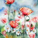 Mohn und Margeriten (14) / Watercolour 30x40cm
