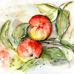 rote Äpfel (7)  / Watercolour 24x32cm