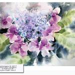 Hydrangea IX 2017 (10) / Watercolour 30x40cm on Fabriano CP © janinaB. 2017